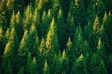 Når blir skogsdrift næring?